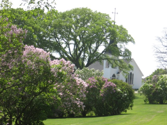 Trinity Church, at the base of Fort Street, is framed by some of the hundreds of lilac bushes in Marquette Park.