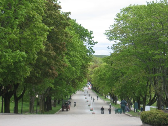 Looking down Cadotte Avenue from where the tulips were planted outside The Grand Hotel