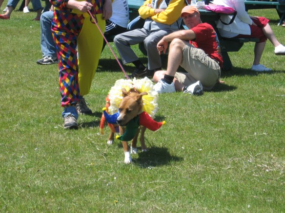 A dog dressed as a lion.
