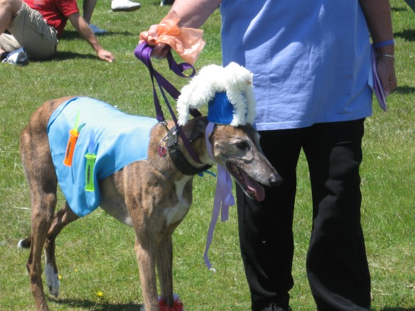 There were greyhounds dressed as horses . . .