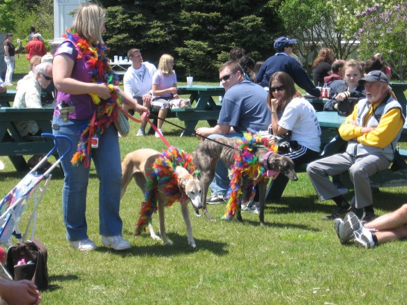 . . . and greyhounds dressed as clowns.