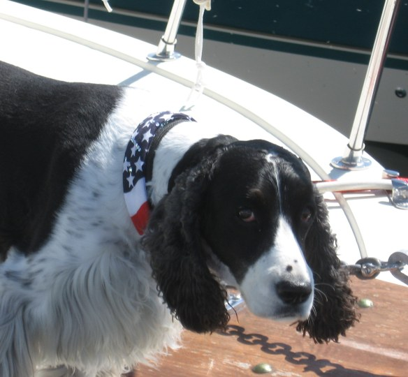 flagdog1