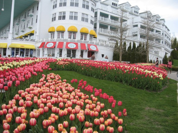 Tulips at The Grand