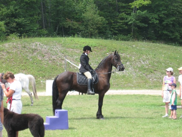 Michelle on her beautiful Friesian.