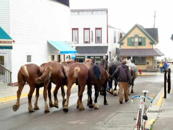 horsesside1