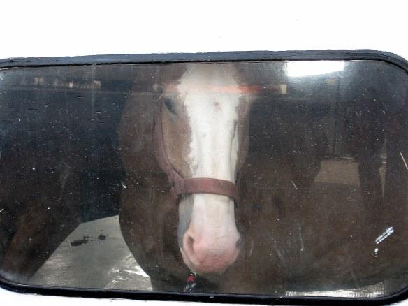horsewindow