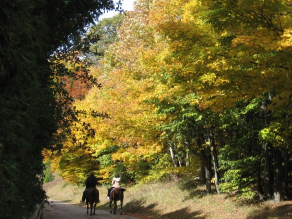 A couple on horseback rides down Huron Road.