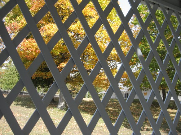 A tree seen through the latticework of a gazebo.