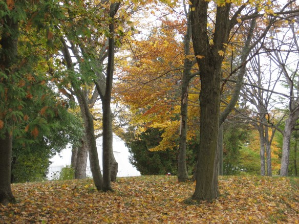 Fallen leaves, and a few still on the trees, atop one of Cadotte's many hills.