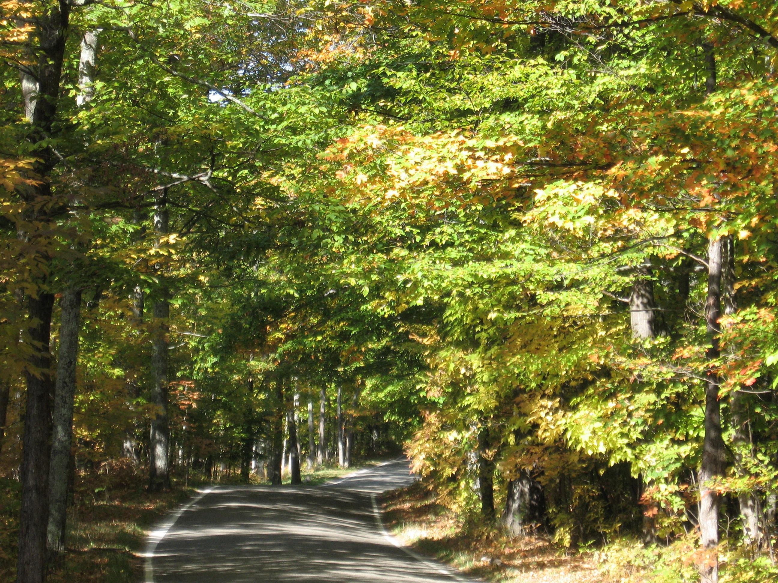 Nature All Aglow 10/10/2011 | Bree\'s Mackinac Island Blog