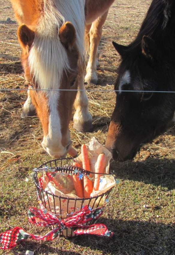 Children at the Island school prepared Christmas treats for the 4-H horses wintering in Mackinaw City.  They were delivered the day before the snow arrived, and Blaze and his pasture-mate sure enjoyed their surprises!