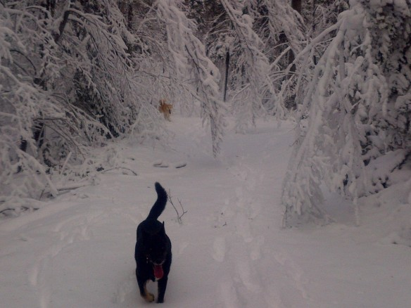 Can you believe this landscape?!  Nicole Doud took one of her dogs - Charlie - out for a run with his playmate, Gia, into the Mackinac woods!