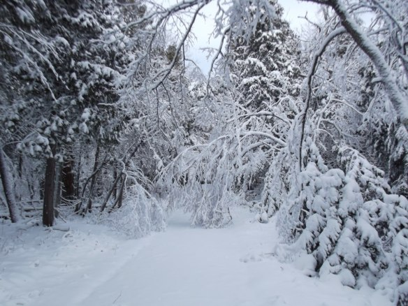 The heavy, wet snow caused many, many downed trees and broken branches.  Lots of work to be done before the State Park crew can get the trails groomed for cross-country skiing.