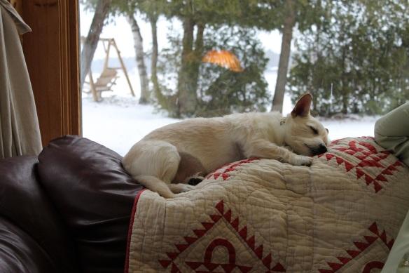 Hank's favorite nap spot.