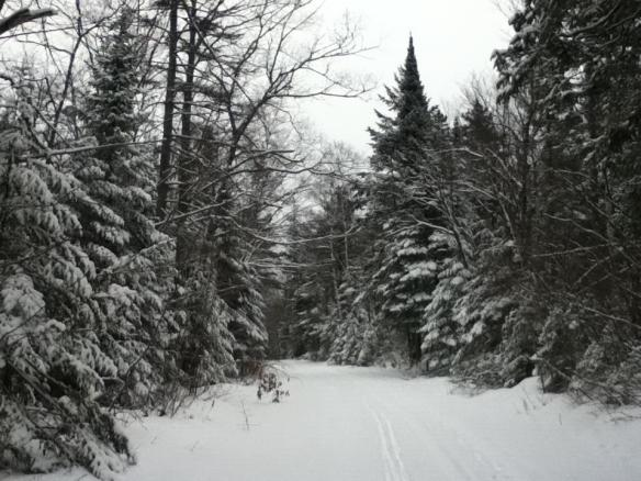 Can't think of many things prettier than newly-fallen snow - no tracks, no footprints.