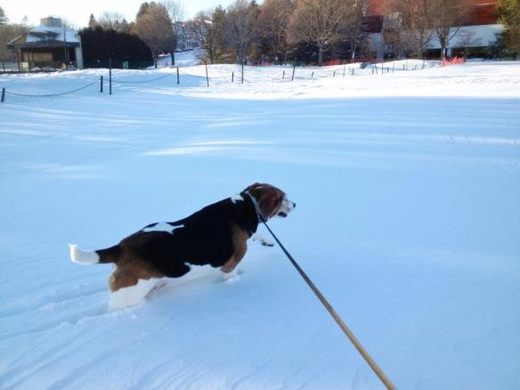 Mary McGuire's dog, Sally, romps in the belly-deep snow. (Photo: Mary McGuire)