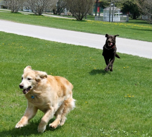 They had great fun chasing each other at full speed around the yard!
