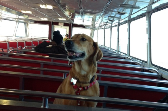 Some friends were on board with their dog, Sage.  What a cutie!