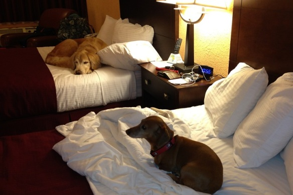 Last night at the hotel.  Ted and I almost just got another room, and just let them have those two beds.  But instead we asked them nicely to share, and they did.