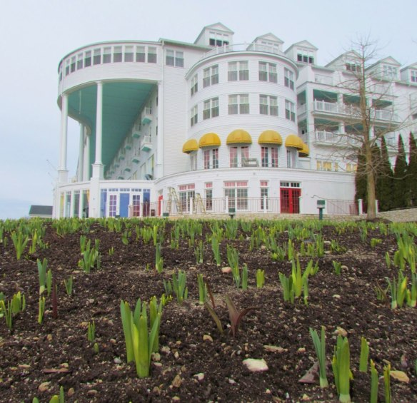 The tulips are coming up at the Grand!