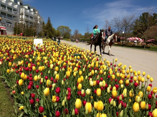 Walking home after church.  The tulips in the front bed at the Grand are in full bloom now!