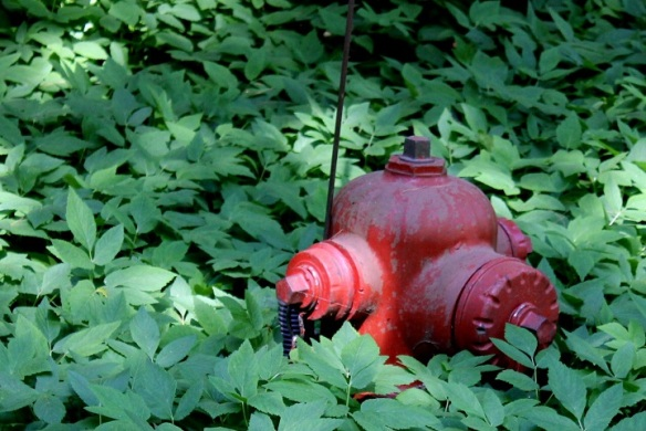 This fire hydrant is almost hidden in the lush vegetation.