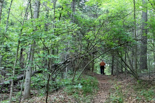 I love these woods walks.  It's out here that you find the real Mackinac - in the trees, in the wildflowers, in the wind and birds and small animals scurrying away at our footsteps.