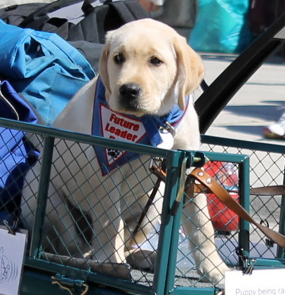 . . . and dogs whose names we'll never know - but who will grow up to be service dogs all over the country.