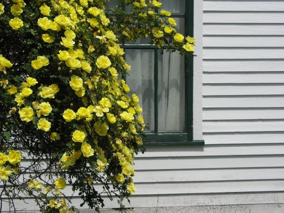 Yellow flowers against a French Lane cottage window.