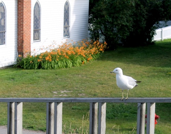 This seagull was enjoying the sun while perched on a bike rack railing across from Trinity Church.