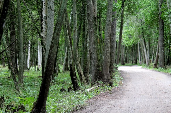 The trail that begins at the maintenance barns and ends at Cupid's Pathway.