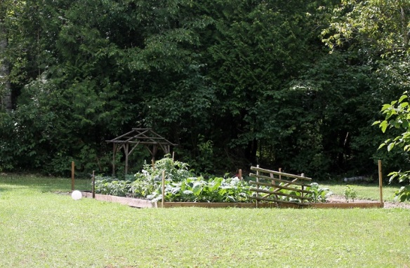 The family has been harvesting from this vegetable garden in the last few weeks.