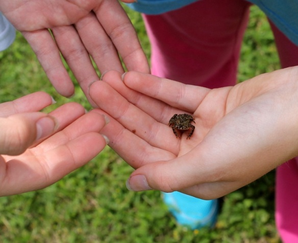 I think what Liz sees and what I see also is a place where it's fun to be a kid outdoors again . . . finding toads in the grass . . .