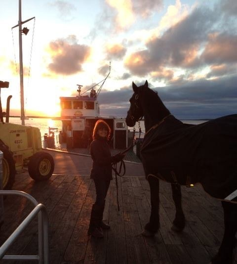 Lars, Ann Levy's beautiful Friesian, left the island at sunrise this week.  Always sad to see the horses leave, both private . . .