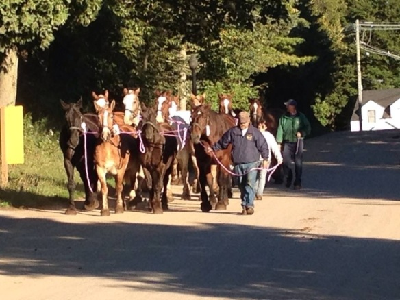 . . . and those belonging to Carriage Tours.  We've been watching them go ever since Labor Day. (Photo: Denise Beaudoin)