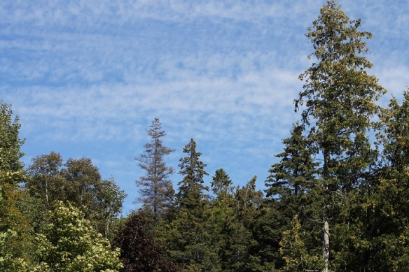 . . . . and above me the Michigan blue sky, mottled only slightly by wispy clouds.