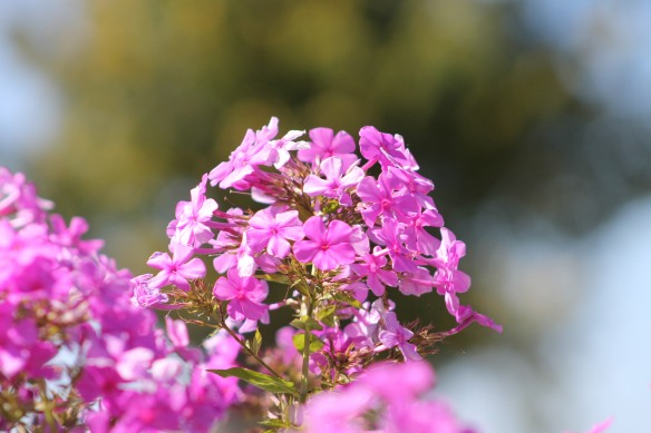 British Landing flowers.