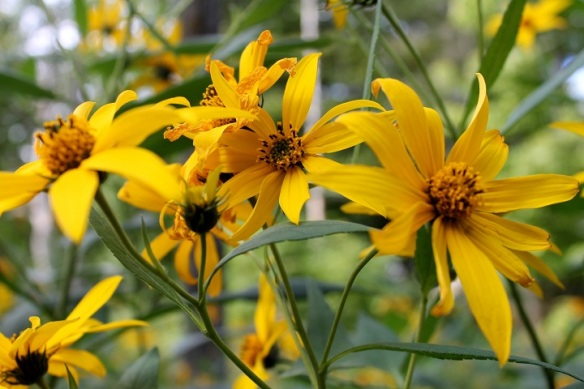Love, love, love yellow flowers.  Are these brown-eyed Susans?  Somebody tell me please!