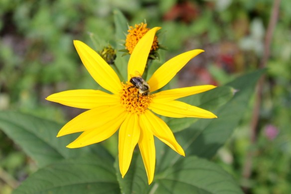 Same flowers - with a bee.