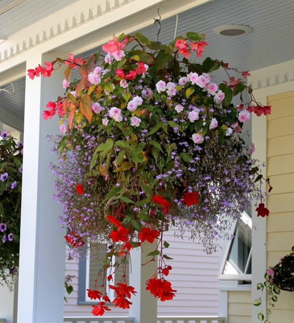 One of many hanging baskets at The Cottage Inn . . .