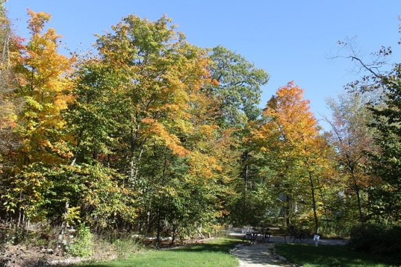 One of the houses we looked at today was in Trillium Heights, where the Beech, Oak and Maple trees are clothed in