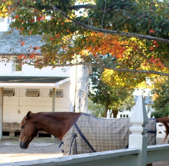 Pretty trees, pretty horse.