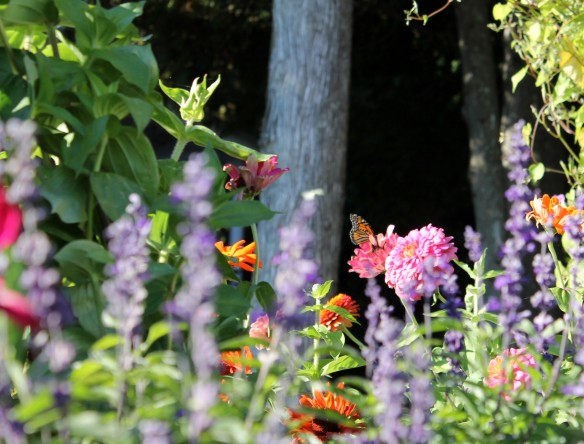 Flowers and a Monarch Butterfly  in front of a West Bluff cottage.