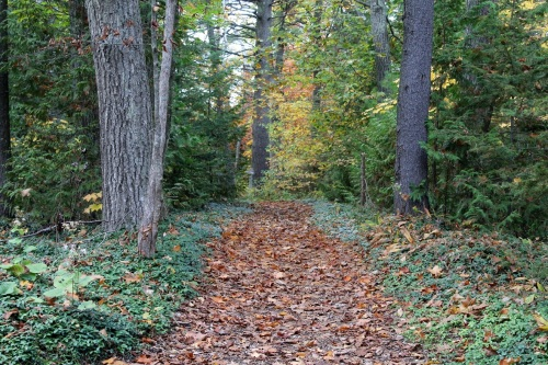 A carpet of crunchy leaves led us back to Turtle Park . . . .