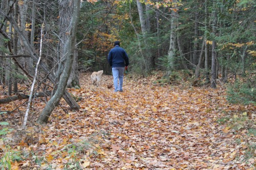 The woods trails are not covered in layer after layer of fallen leaves.