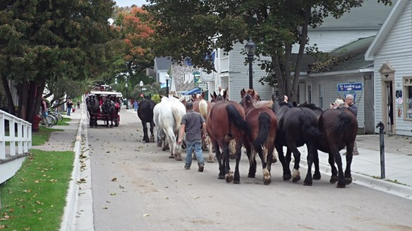 Horses are still leaving the Island at least twice a week (Photo: Jill Sawatzki) . . .