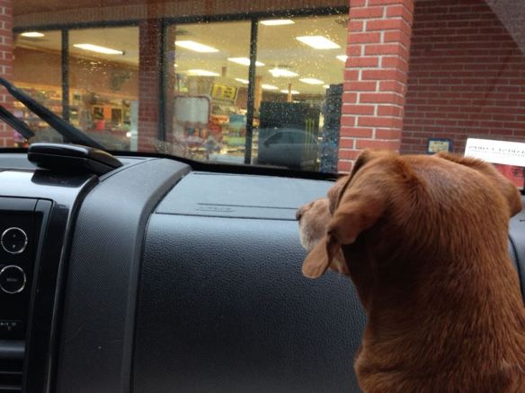 About five miles from the house we stopped at Stripling's (You Never Sausage a Place) for some supper provisions.  For the first time since getting in the car this morning, Maddie looked interested in where she was  . . . . .