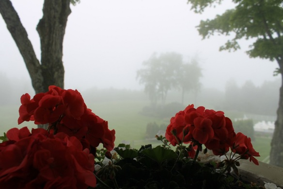. . . . and I shot this photo past the geraniums blooming outside one of our room windows.