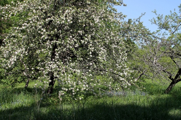 For an added special experience, stroll down to the back of the property and out past the apple orchard . . .