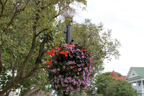 The hanging baskets are still going strong.